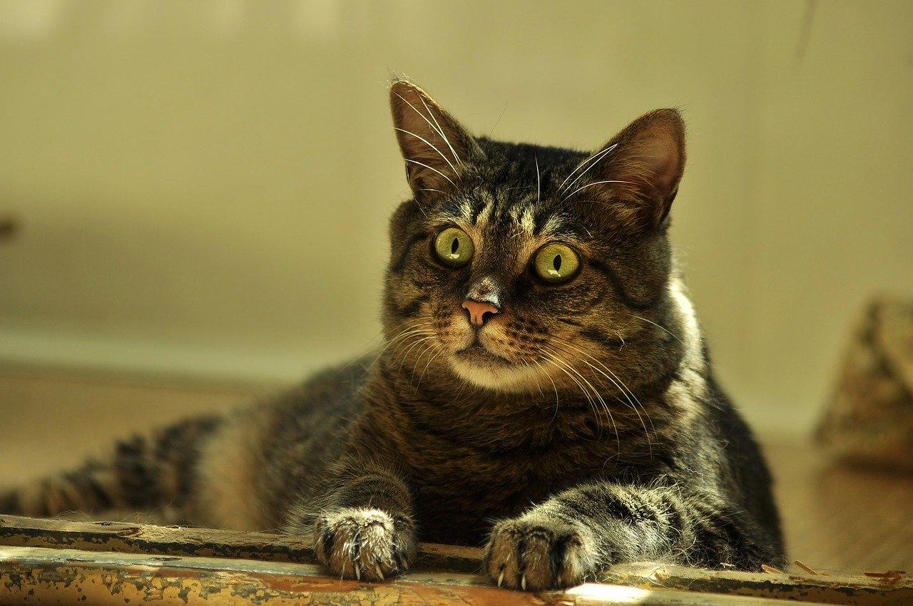 cat-4346491_1280.jpg