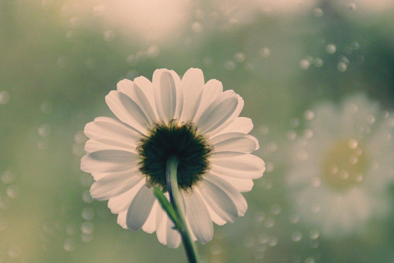 flower-5115850_1280.jpg