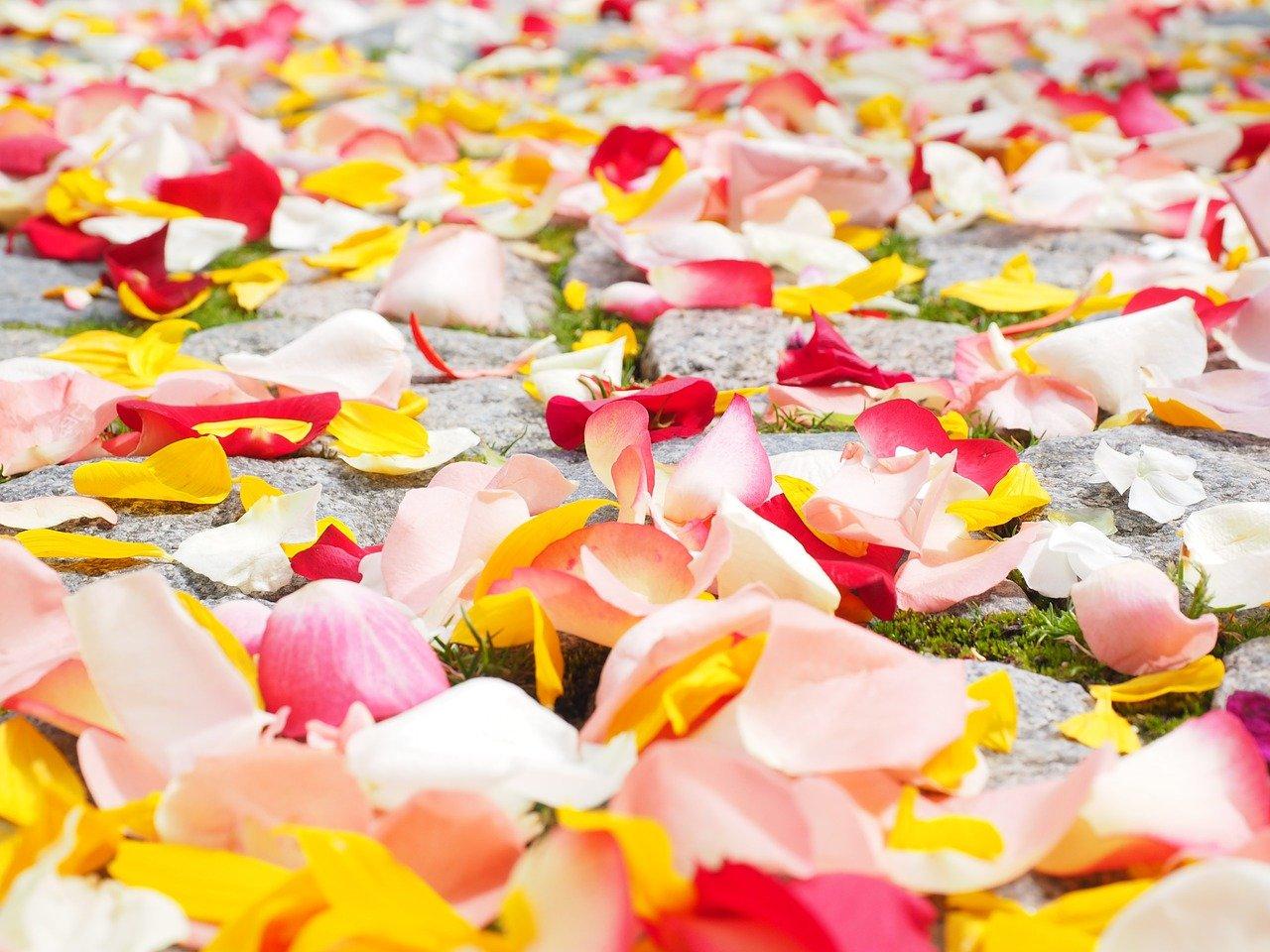 rose-petals-693570_1280.jpg
