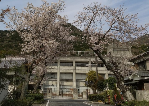 R2004003桜