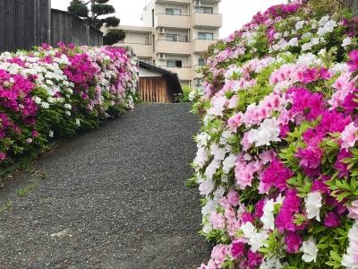 tsutsuji20043.jpg