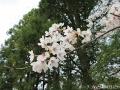スピーディーお花見3