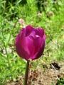 春の花を撮る