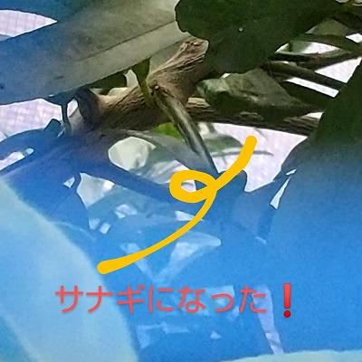 HORIZON_0001_BURST20201004063411531_COVER~3