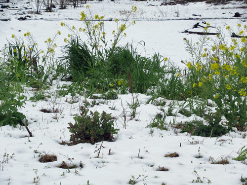 季節外れな雪の翌朝散歩
