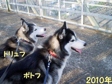 跨線橋の鉄犬トリュポっちゃん