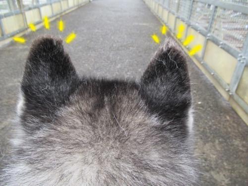 耳の先毛がポソポソ
