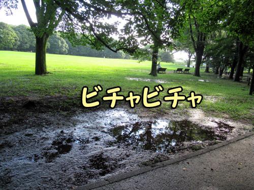 雨上がりの自由広場