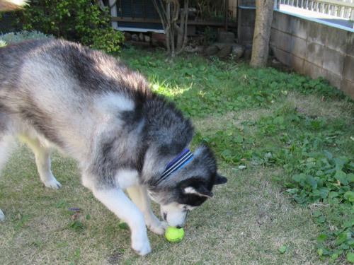 お庭でボール遊びスフレ
