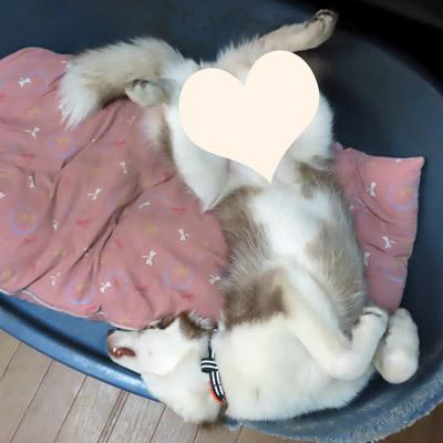 マドレーヌの寝姿
