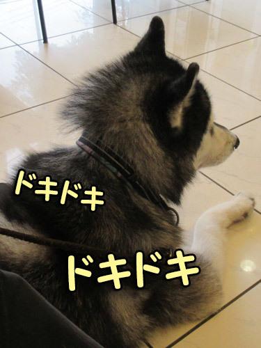 ドキドキスっちゃん