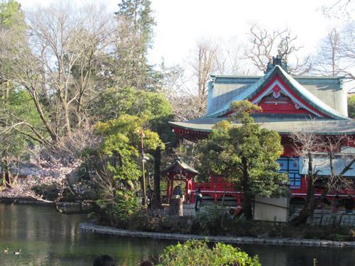 井の頭公園の桜2020
