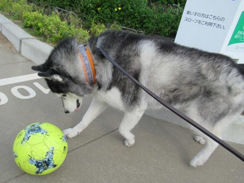 サッカーボール発見