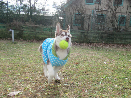 ボール遊びマドレーヌ