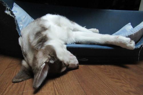 マドレーヌの豪快な寝姿