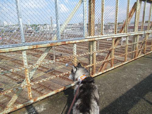 跨線橋のスフレ