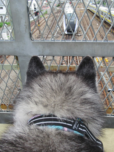 跨線橋で電車観察スフレ