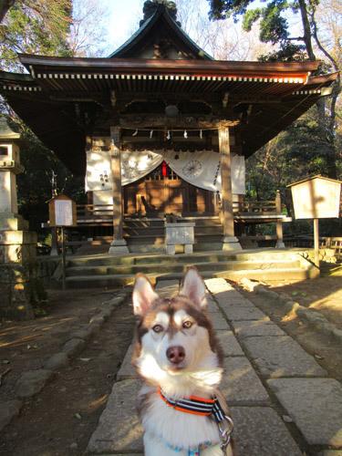 マドちゃんのお初な深大寺初詣