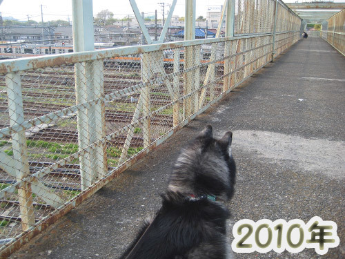 跨線橋の鉄犬ポトフ