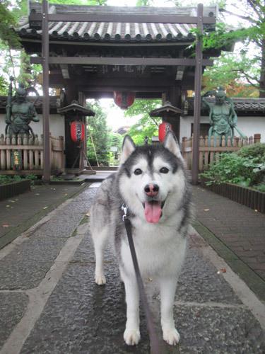 朝散歩スフレ