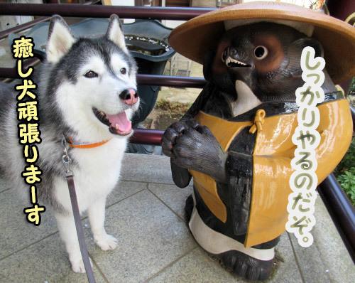 スフレとタヌキ和尚さん