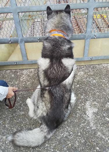 跨線橋の鉄犬スフレ