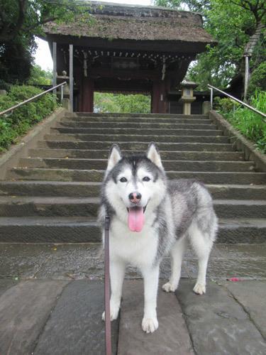 雨上がりの深大寺散歩スフレ