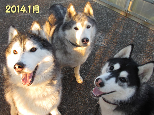 跨線橋の鉄犬三兄弟
