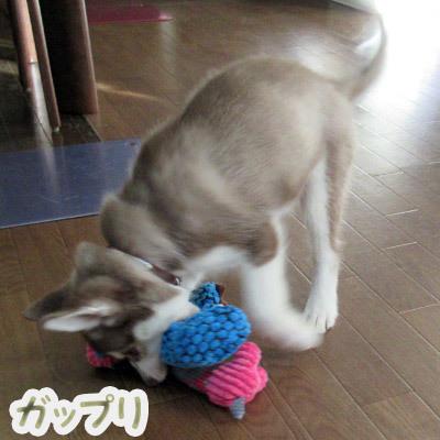 おもちゃで遊ぶマドレーヌ