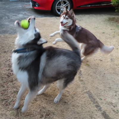 お庭ボール遊び