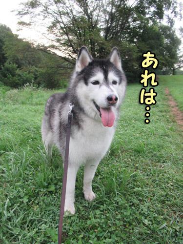 野川公園散歩スフレ