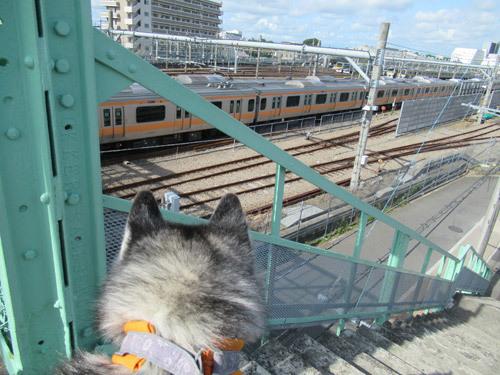 朝の電車観察