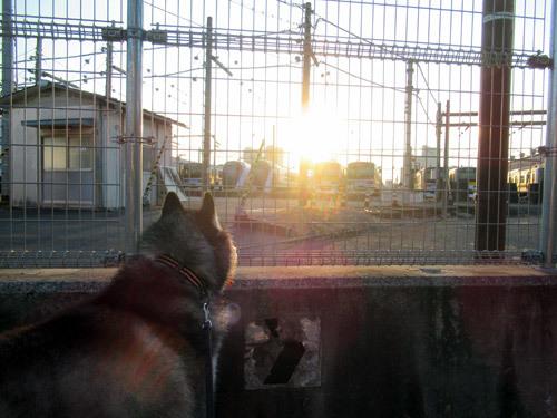 早朝の電車庫観察スフレ