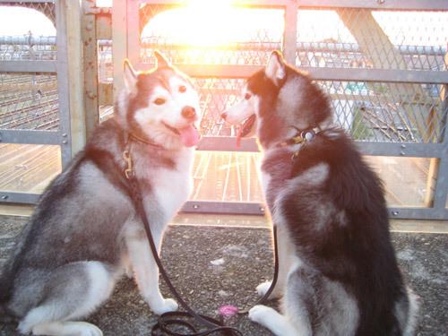 夕陽の中のトリュフ&ポトフ