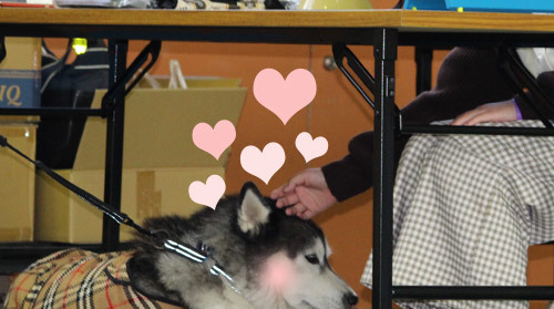 司会犬スフレ