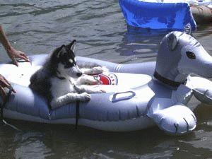 ハスキーボートのポトフ