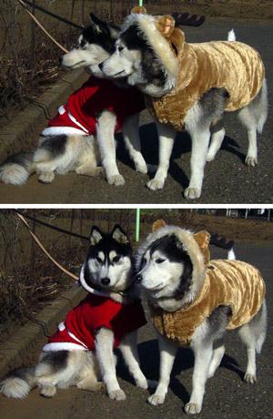 クリスマス衣装のトリュフ&ポトフ