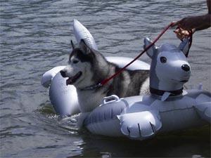 ハスキーボートのトリュフ