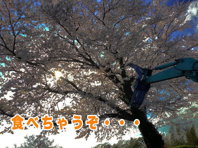 IMG_5030.jpg