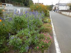 稲田堤~京王よみうりランド 季節の花