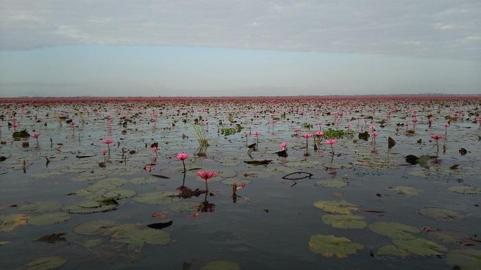 レッドロータスの湖 3
