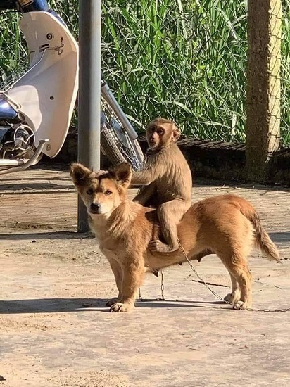 犬猿の仲 (1)