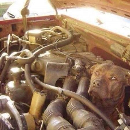 自動車修理 (1)