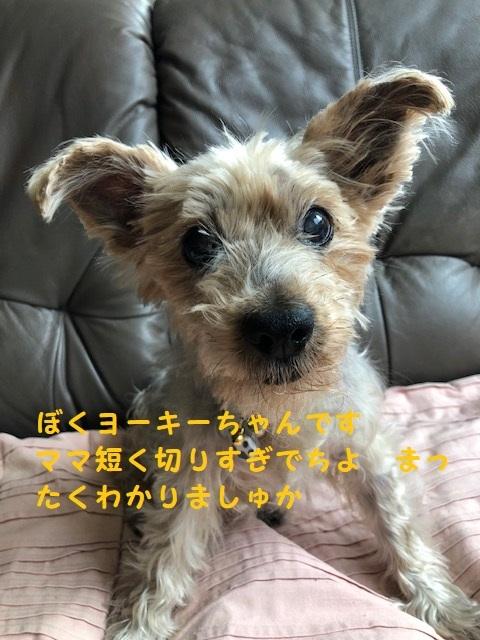 yo-ki-desu