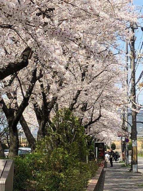 27の1桜