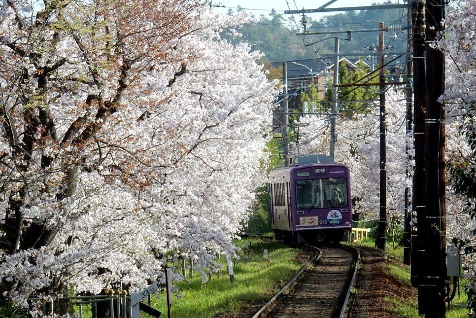 八坂嵐山桜 194