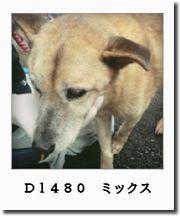 d1480-0.jpg
