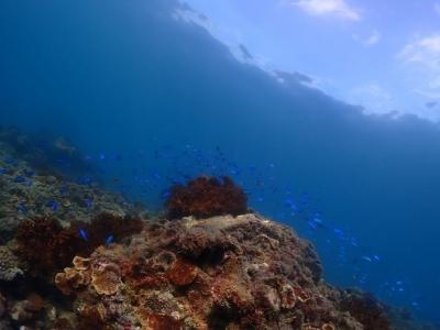 20201119★徳島の海!!_201120