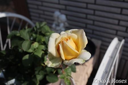 s-IMG_7165_20200610093100c1f.jpg