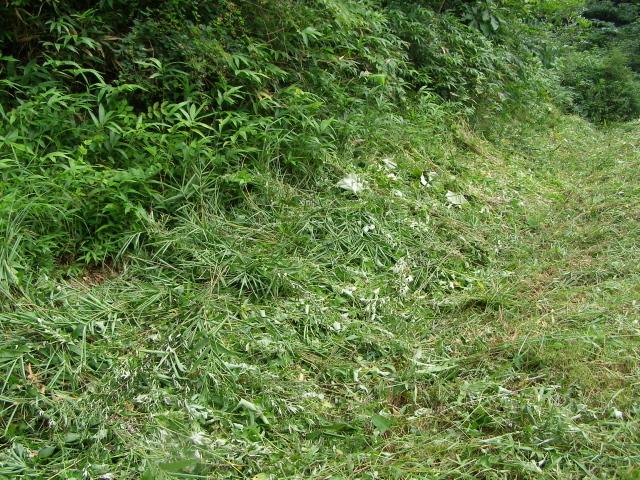草刈り後0809